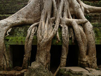 The Roots of Ta Prohm von Phil  Caldwell