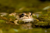 Bubbles the Frog von Simon Littlejohn