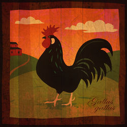 Rooster-ii