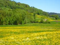 Fruehlingswiese