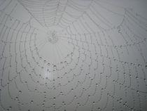 Spinnennetztau von Erik Mugira
