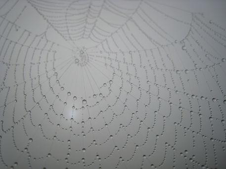 Spinnennetztau