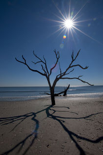 DEAD TREES ON BEACH, SUNBURST von Wolfgang Kaehler