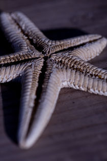 Starfish von Simon Littlejohn