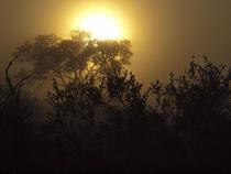 African Lowveld Sunrize by Yolande  van Niekerk
