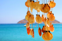 Dangling Shells in a Wind Chime by Ian C Whitworth
