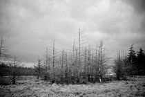 Rhondda by Matt Cope