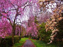Reynolda Gardens Reverie