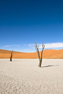 Dead Acacia Trees, Dead Vlei by Russell Bevan Photography