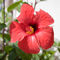 Red-flower-off-pollensa
