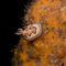 Nudibranch-chromodoris-coi-1