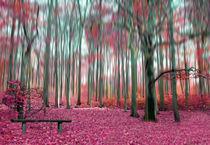 zauberwald von Doro Lehnen