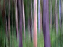 Purple Forest Impression by Kitsmumma Fine Art Photography
