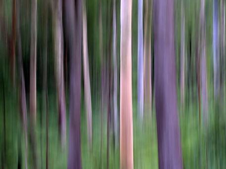 Deep-purple-forest-filt