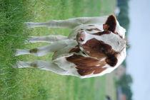 Cow von Edouard Moreels