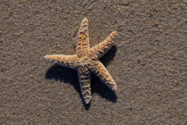 Starfish #1 by Christopher Seufert