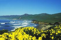 Jalama Beach, CA von Melissa Salter