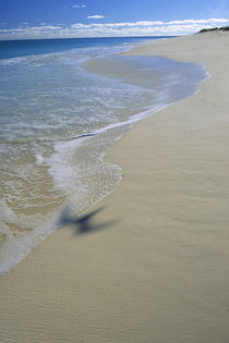 BIRD FLYING OVER WHITE SAND BEACH von Wolfgang Kaehler
