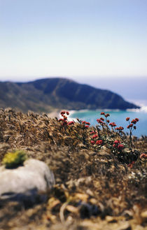 Natural Landscape, Channel Islands National Park von Melissa Salter