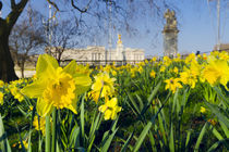 England, London, Buckingham Palace in Spring by Alan Copson