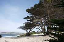 Carmel CA beach with morning light by Carl Tyer