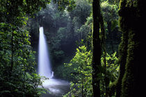 Waterfall in Tropical Rainforest by Wolfgang Kaehler