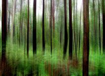 Eucalypts and Bracken von Kitsmumma Fine Art Photography