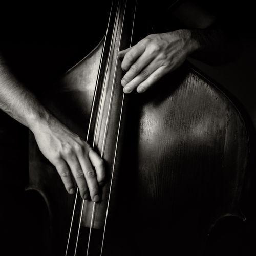 The-bassplayer