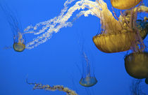 Floating jelly