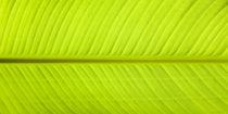 Banana Leaf von Sean Davey