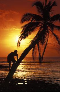 Coconut tree climber von Sean Davey