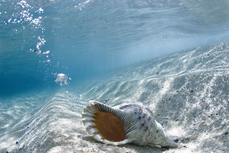 Conch-shell-bubbles