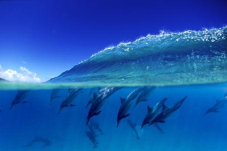 Dolphinpeak
