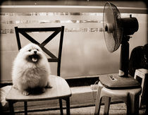 Hot Dog! by Tracey  Tomtene
