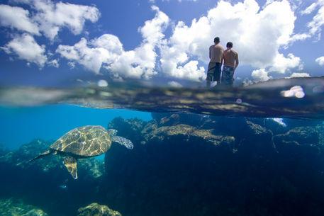 Hawaiian-sea-turtle-5