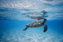 breathing turtle