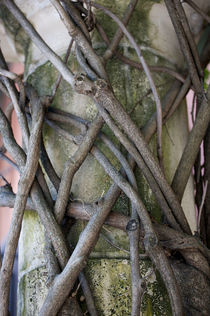 Pattern-of-vine-stems