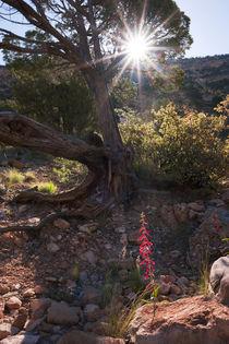 Flower Grand Canyon/Arizona von Benjamin Hiller