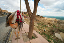 Mule in the Old City of Mardin / Southeast Turkey by Benjamin Hiller