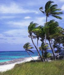 Elbow Cay, Bahamas von Melissa Salter