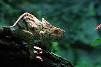 Kameleon von Roger Andre Bauer