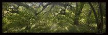 Wandering green von Ariel Campos