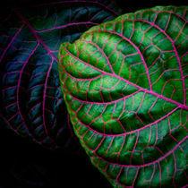 Grün und Pink von David Pinzer