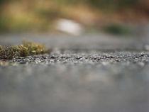 Ants I (100x75) von gallery-b
