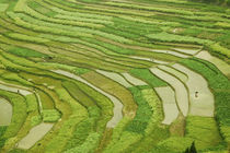 Farmland by the Three Gorges of the Yangtze River, China by Danita Delimont