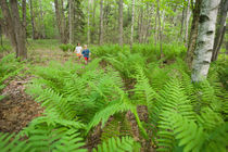 Young children play among ferns in the forest near Marquoit Bay in Brunswick von Danita Delimont