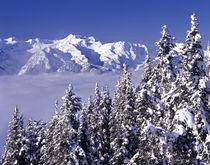 WA, Olympic NP, Olympic Mountain Range von Danita Delimont