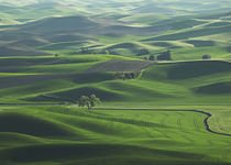 The rolling Palouse Hills of  eastern Washington by Danita Delimont