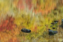 Autum colors reflected on Beaver Pond, New Hampshire by Danita Delimont