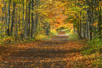 USA, Michigan, Upper Peninsula. Roadway into fall foliage. Credit as by Danita Delimont
